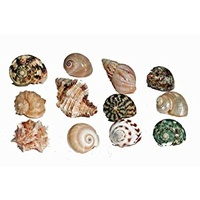 Hermit Crab Spare Shell - Regular - X-Large